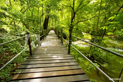 green forest, bridge walk to tropical humid green forest