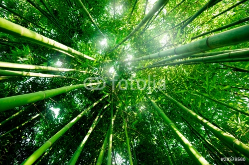 Bambou zen forêt
