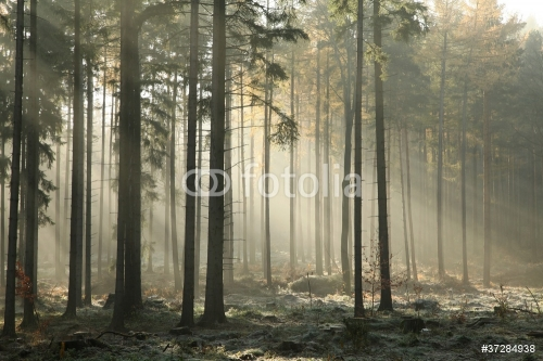 Picturesque autumnal forest on a foggy November morning