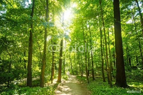 Wald mit Morgensonne :)